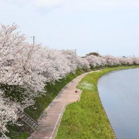 観月河川公園