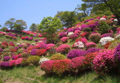 熊野山公園