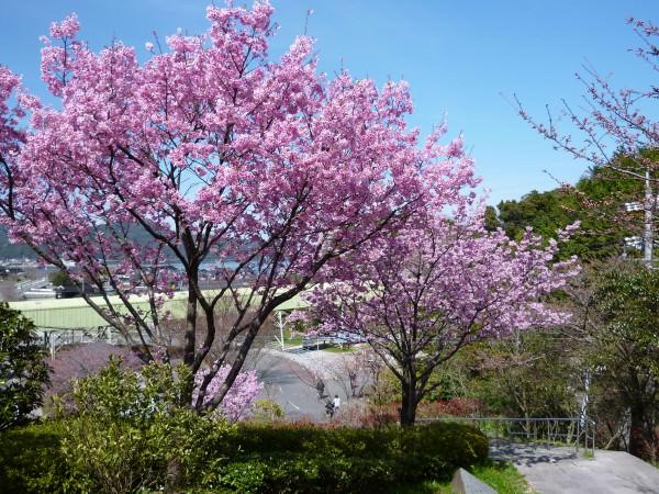 みすゞ公園 (5)