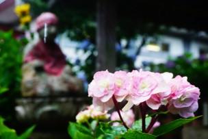 20160624_向徳寺