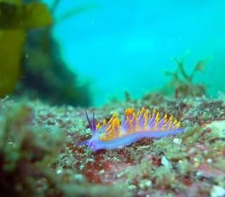 青海島ダイビングスポット