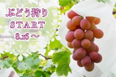 20160816-09_津田農園_ぶどう狩り